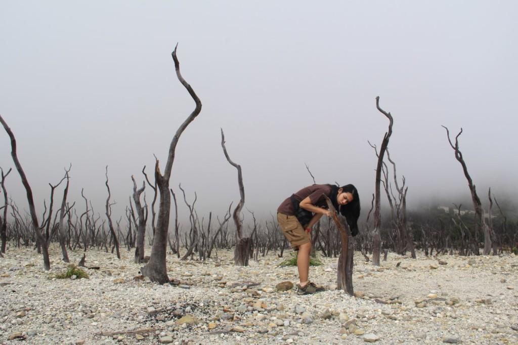 hutan mati 2