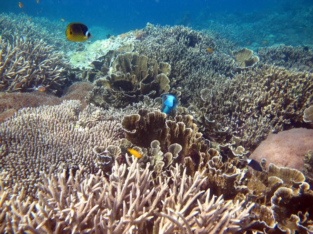 Pemandangan bawah laut