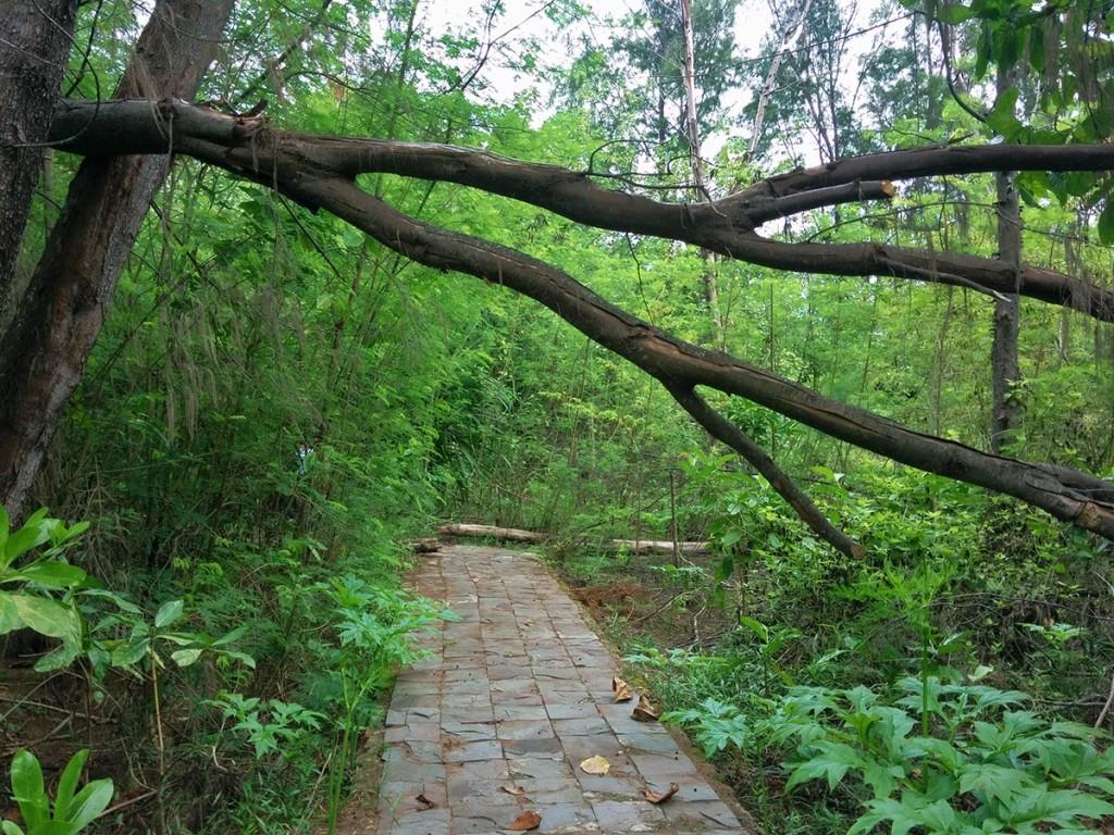 Jalan menuju ke makam