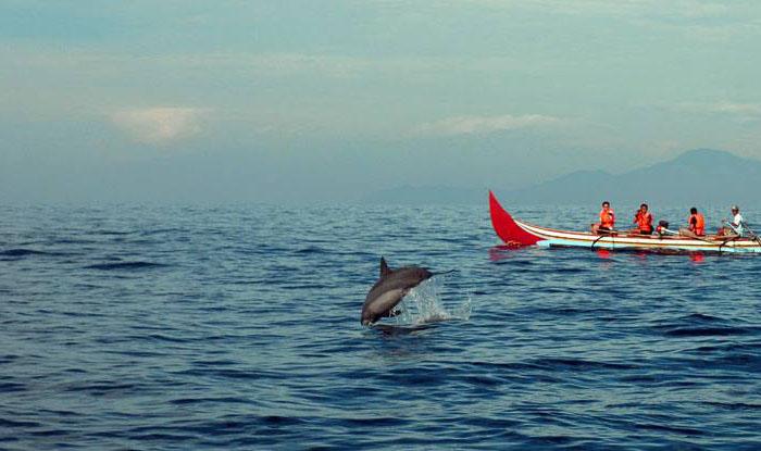 Dolphin teluk kiluan