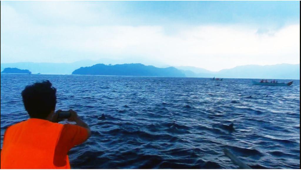 Memburu foto lumba-lumba di teluk kiluan