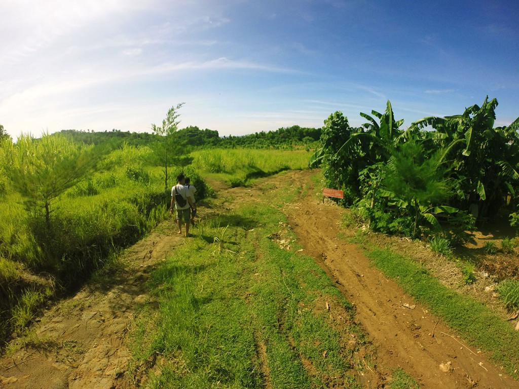 pemandangan sawah menuju pantai jungwok