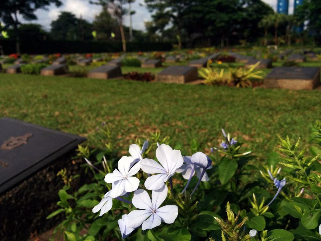bunga putih di ereveld menteng pulo