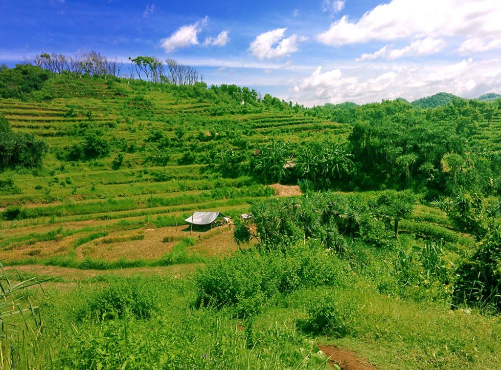 bukit hijau di sekitar pantai jungwok