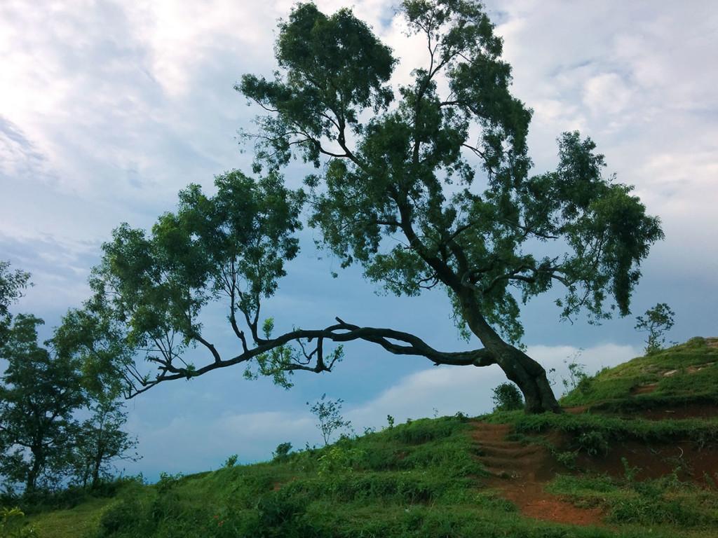 pohon di sriten