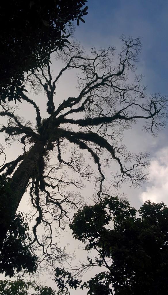 Dibawah pohon besar