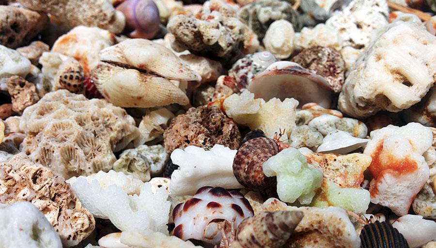 Kelomang bertaburan di sepanjang Pantai Krokoh