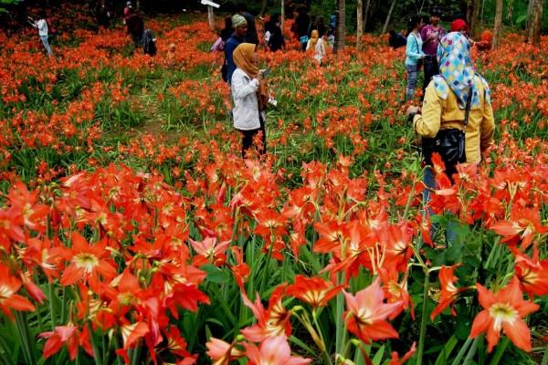 bunga-lily-7a3eb9128a5a9b33df5be7ec6e2bffd3_600x400
